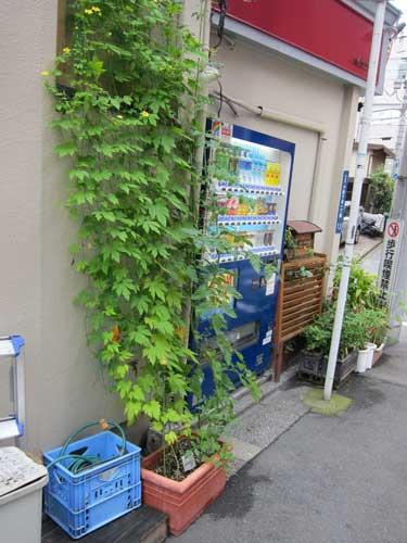 vegetable | Tokyo Green Space