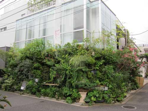 Kaza Hana Amazing Garden Shop Cafe Bar In Aoyama Tokyo