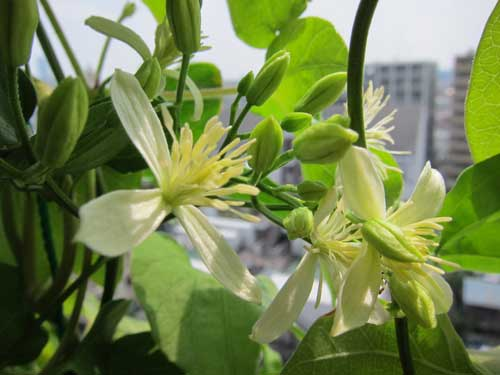 Anyone know the name of this flowering weed tokyo green space - Plants for every room in your home extra comfort and health ...