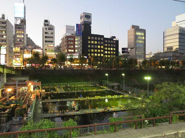 fish_pond_ichigaya
