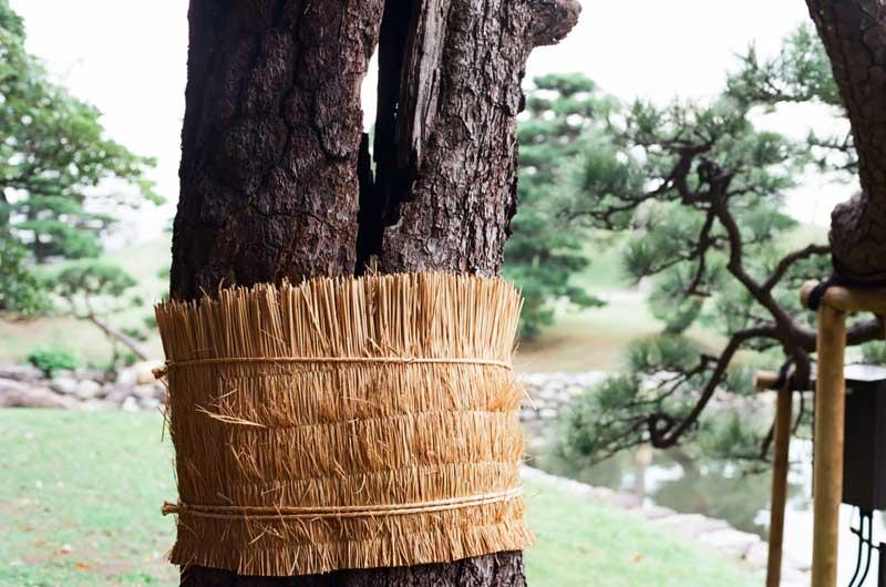 insect_skirt_hamarikyu_pine