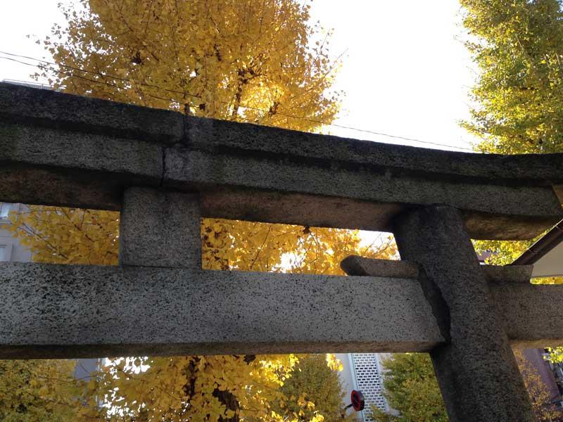local_shrine_gate_ginkgo_ye