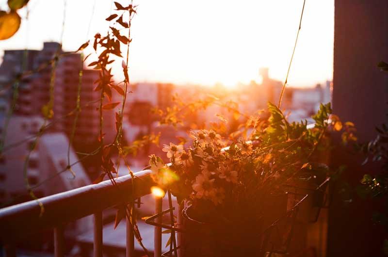 sunset_nakano_balcony_daisy
