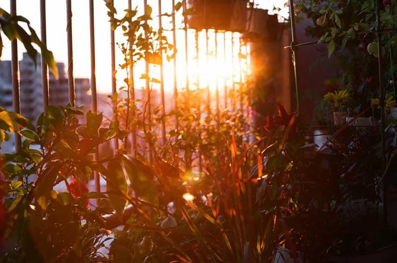 sunset_nakano_balcony_longv