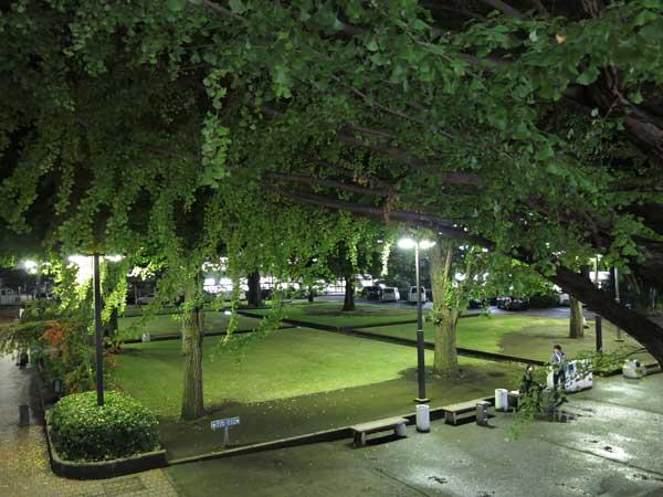 tamabi_campus_lawn