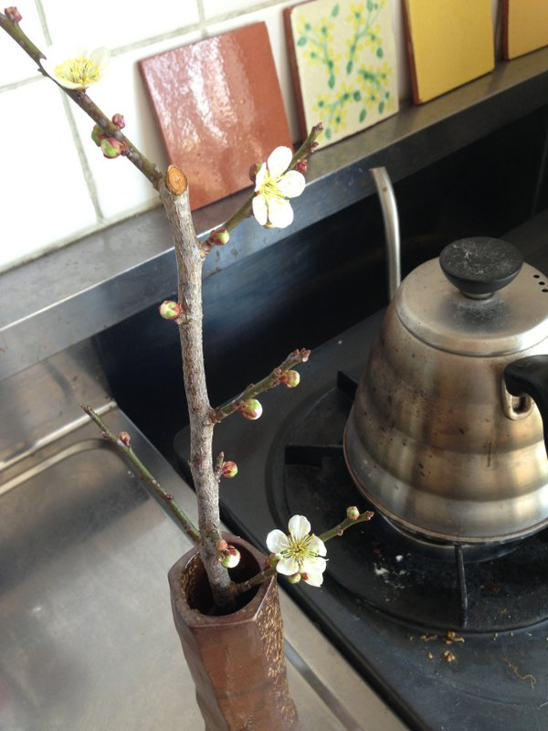 plum_branch_vase_kitchen_nakano