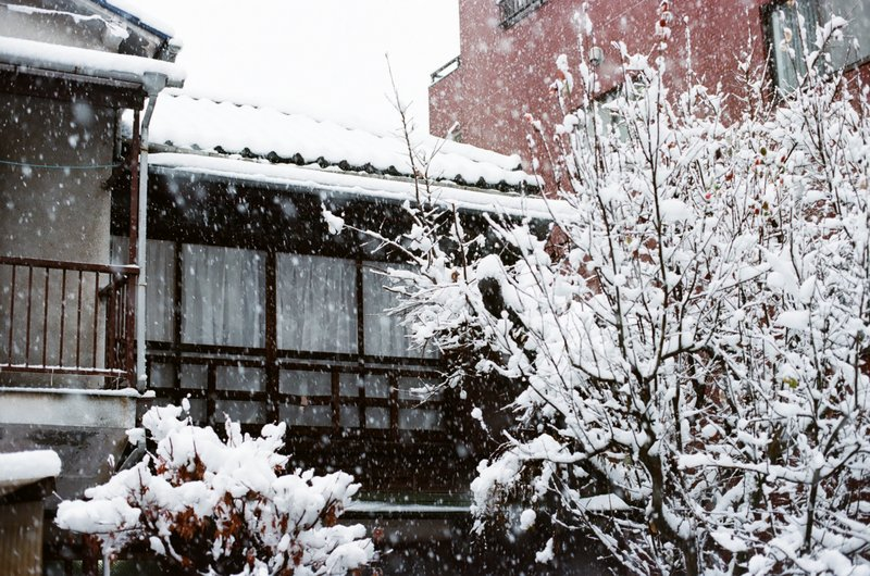 showa_home_snow_fruittree_window