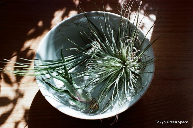 airplants_nakano_home