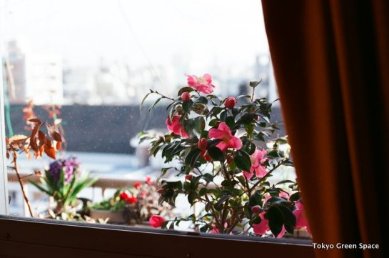 balcony_city_winter_flowers_nakano_home