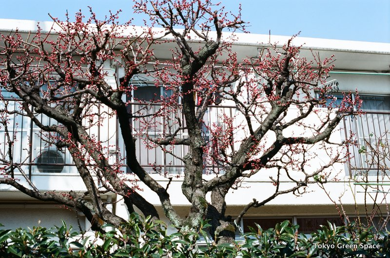 buds_koenji_winter_apartments