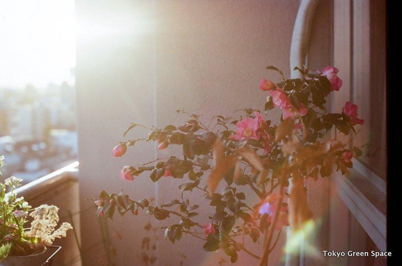 camellia_balcony_nakano_home