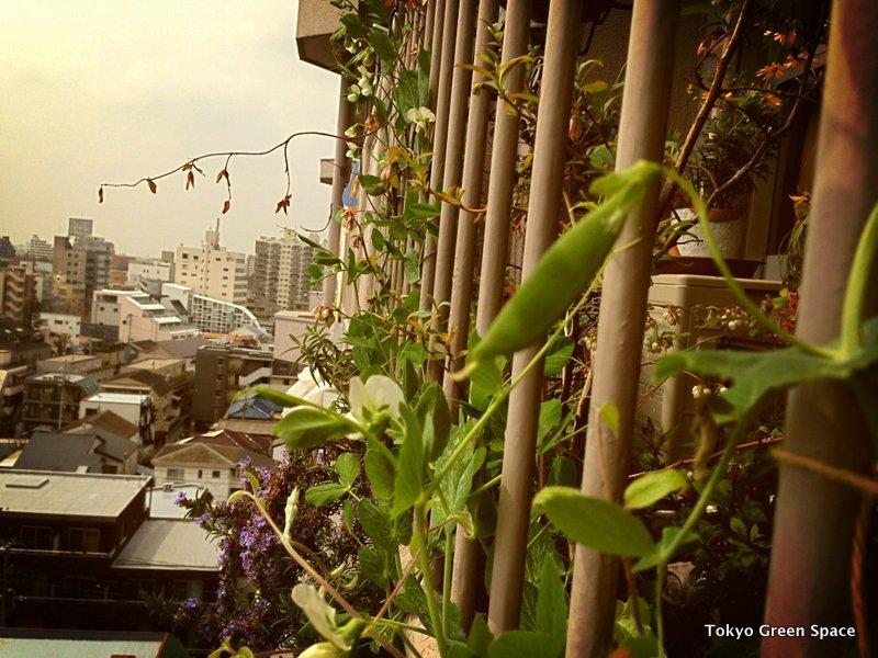 snappeas_balcony