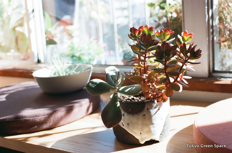 succulents_nakano_home_ceramic