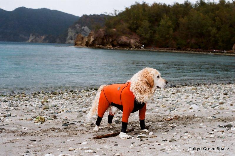 dog_wetsuit_chichijima
