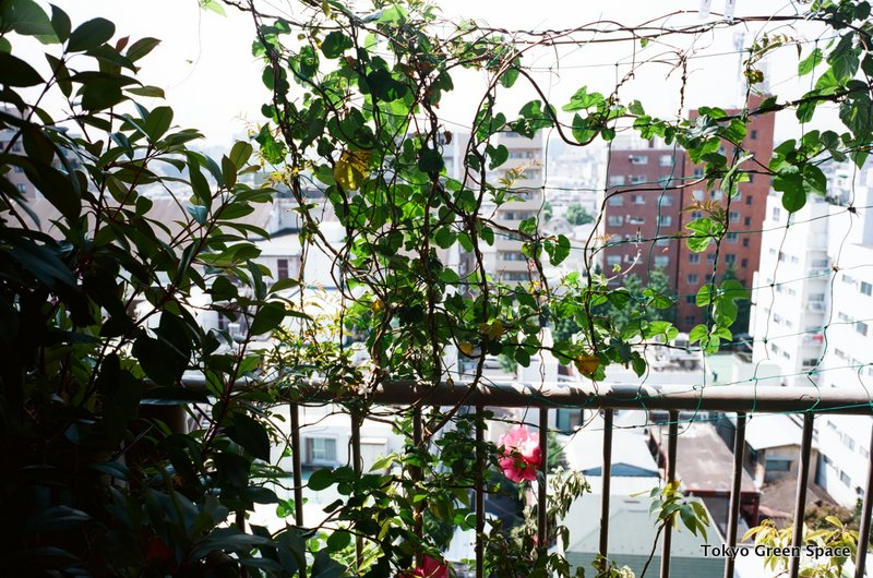greencurtain_may_nakano_balcony