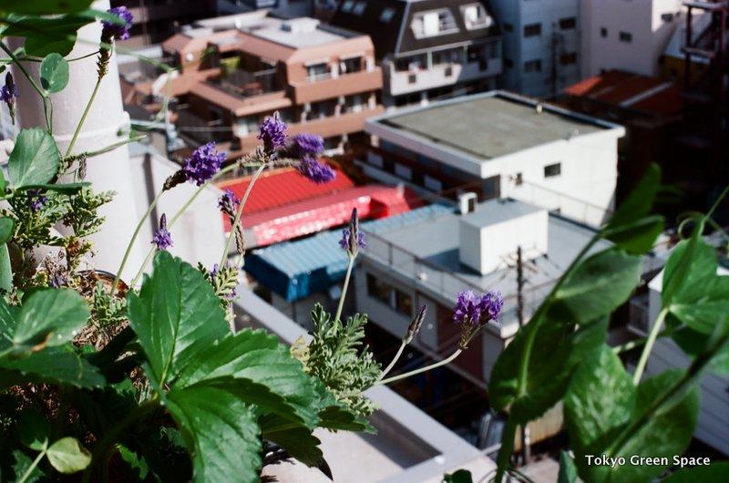 lavendar_nakano_balcony