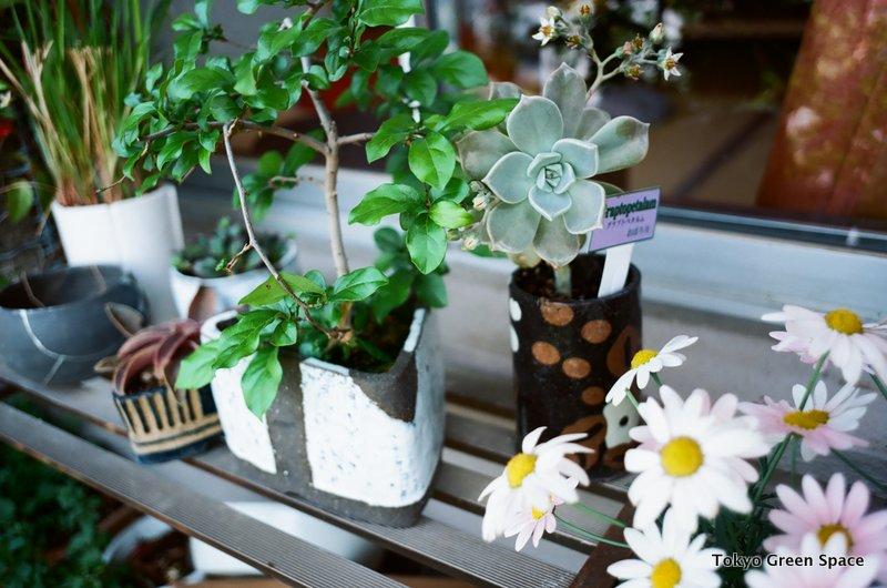 leafingout_persimmon_bonsai_Nakano_balcony