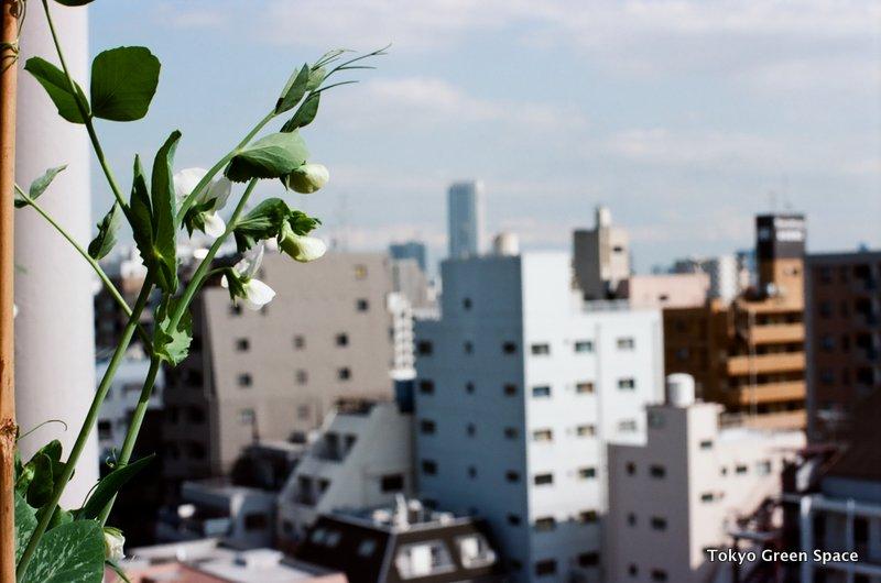 snappea_flowers_nakano_balcony