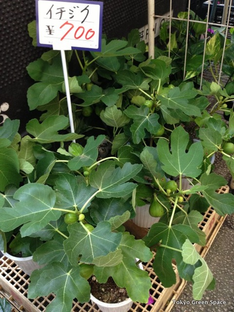 figs_forsale_nakano