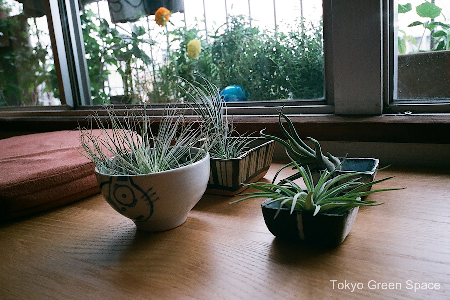 airplant_bonsai_shu_drawing_windowbench_home