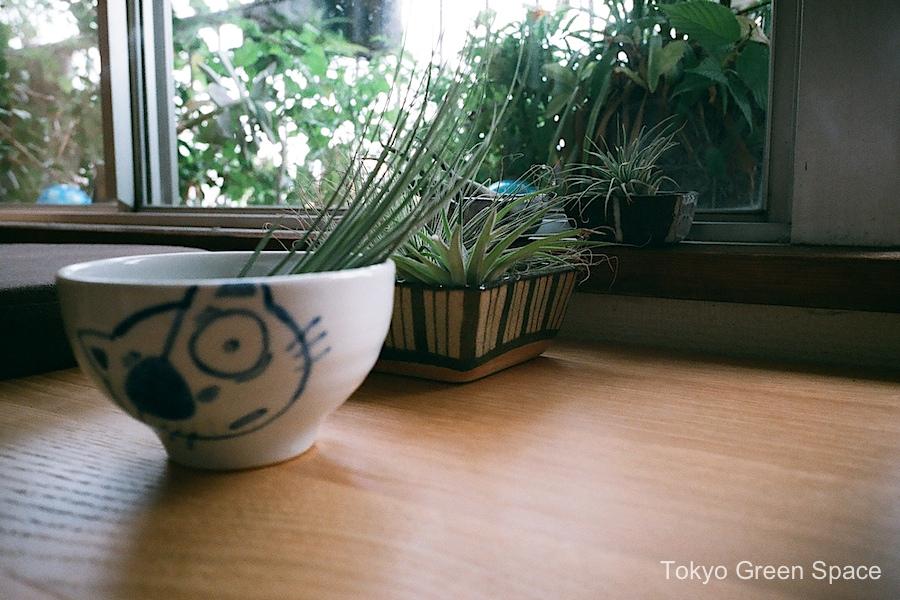 airplant_shu_drawing_home