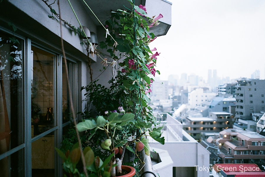 balcony_garden_cityview_home