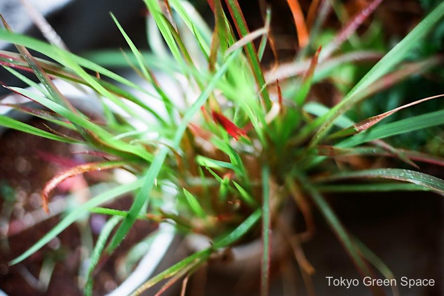 decorative_grass_summer_rain