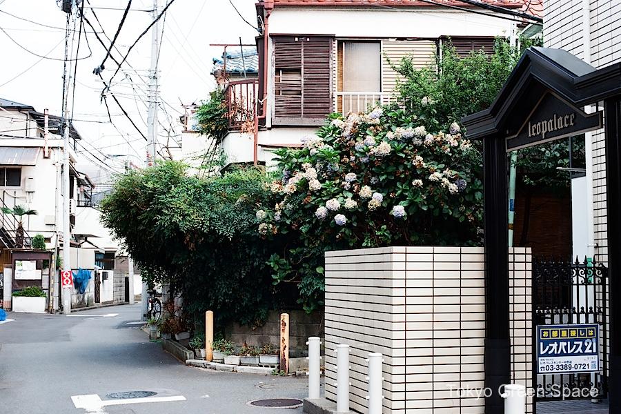 abandoned_house_hydrangea_nakano