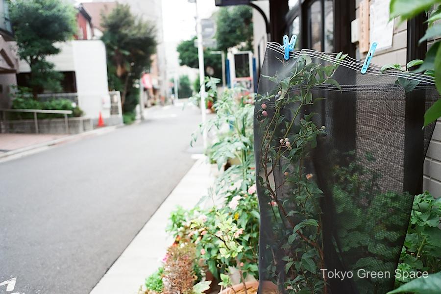 blueberry_net_clothespins_sidewalk_nakano