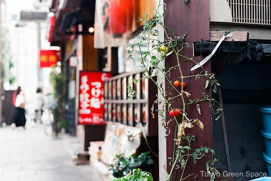 cherry_tomatos_chineseresto_nakano_southexit