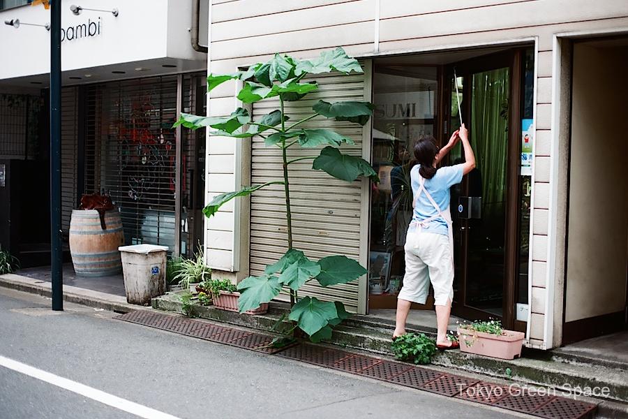 giant_weed_sidewalk_shop_yoyogi_uehara