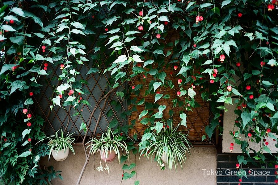 lantern_flower_koenji_window