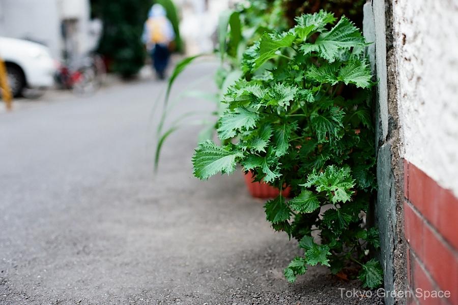 shiso_sidewalk_4seasongarden_nakano
