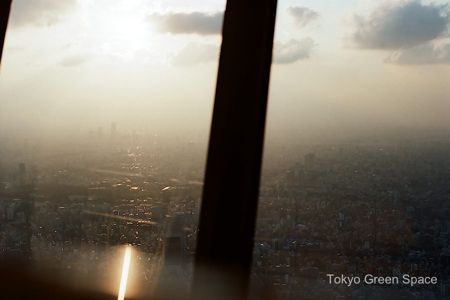 SkyTree_sunset