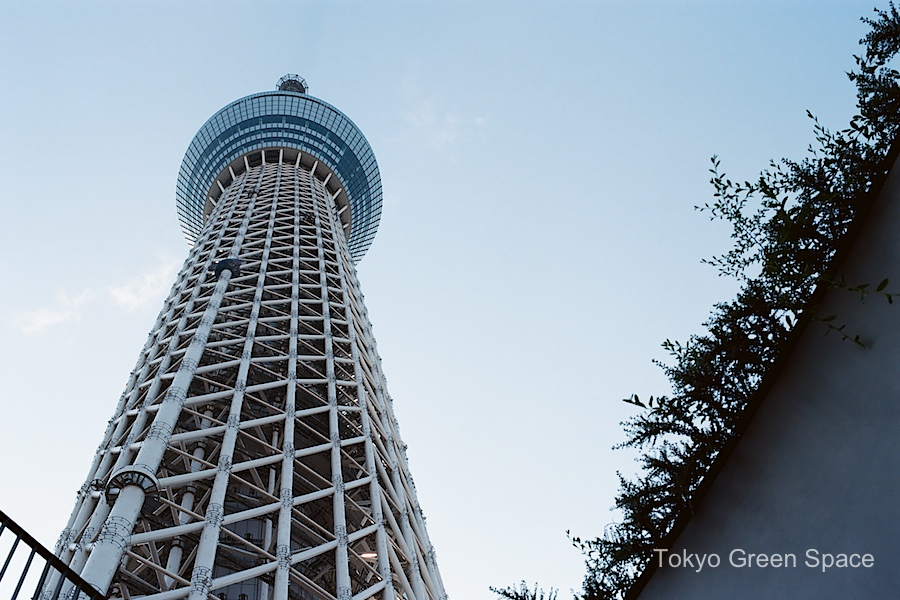 SkyTree_view_from_ground