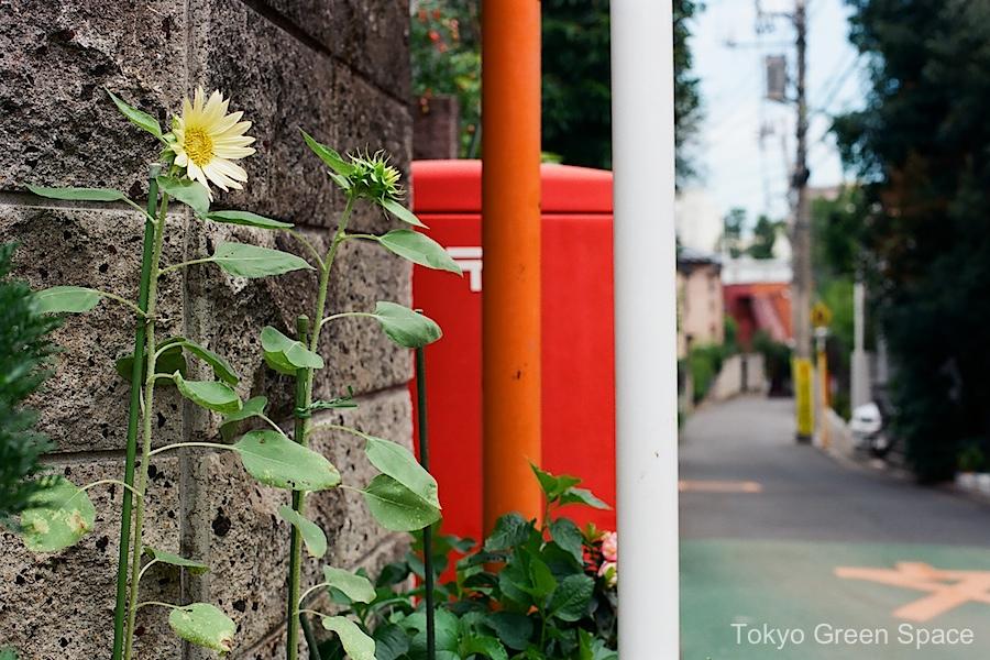 sunflowers_alley_nakano