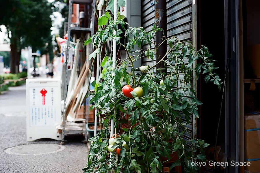 tomato_sidewalk_nakano_workspace