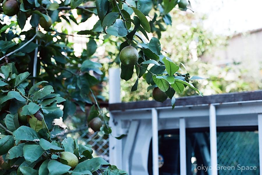 citrus_truck_nakano