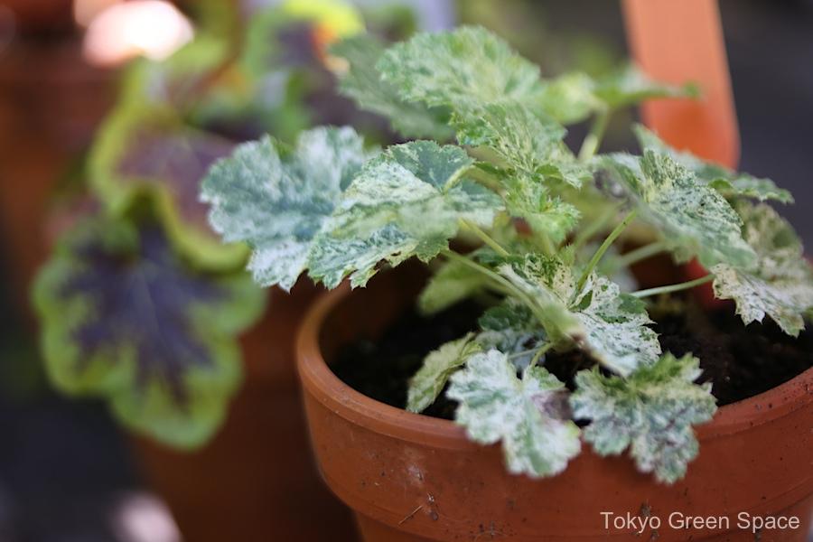 clintonpark_small_flowerpots