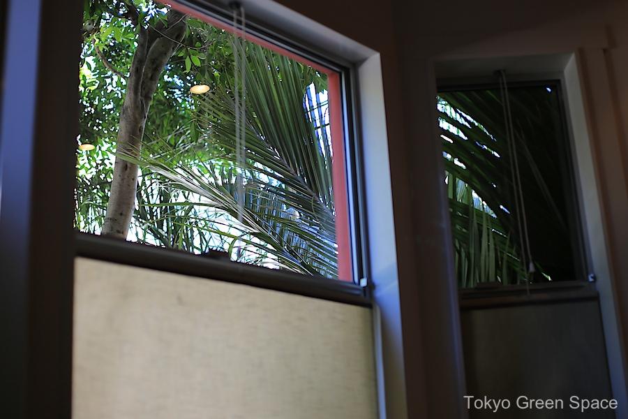 cllintonpark_palm_rhopalostylus_sidewalk_viewedfromlivingroom