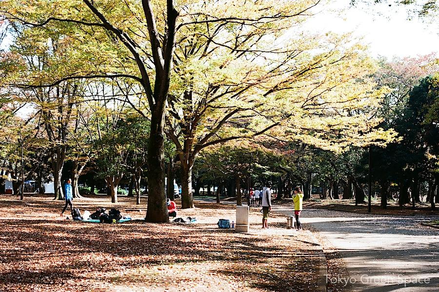 yoyogipark_runners_fall_leaves