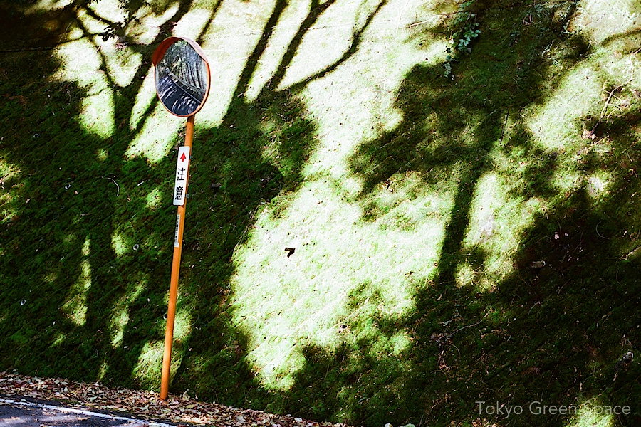 moss_road_shadow_mirror_izu