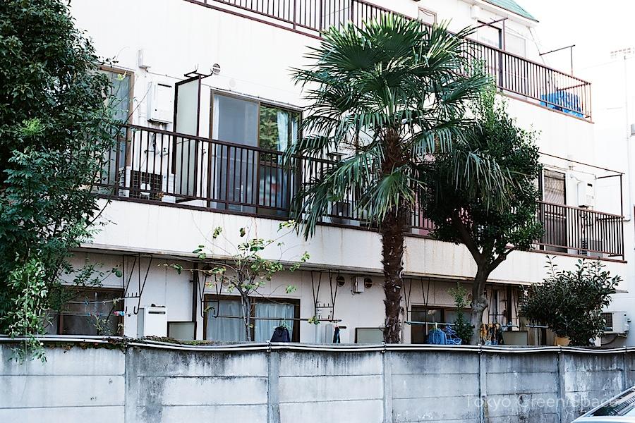 shuro_backyard_palm_nakano