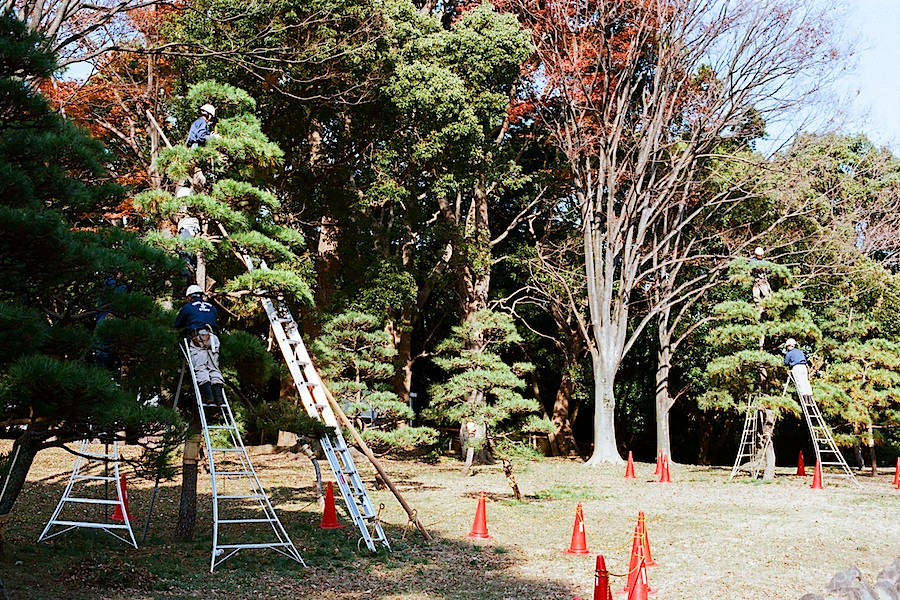 tree_pruning_yoyogi_park