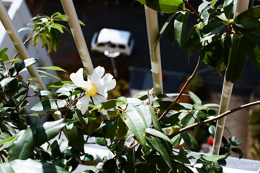 white_camellia_nakano_balcony_truck