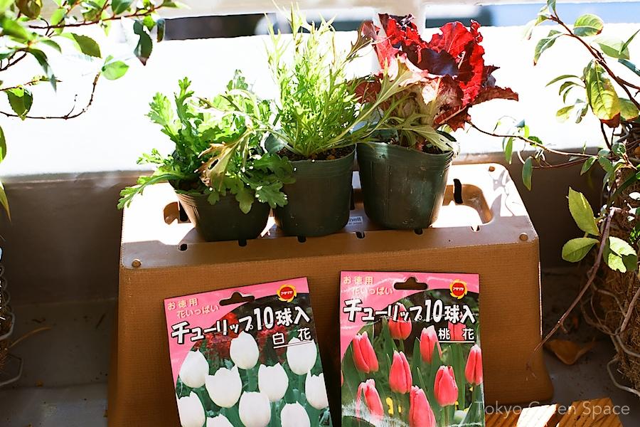 winter_greens_tulips_nakano_balcony