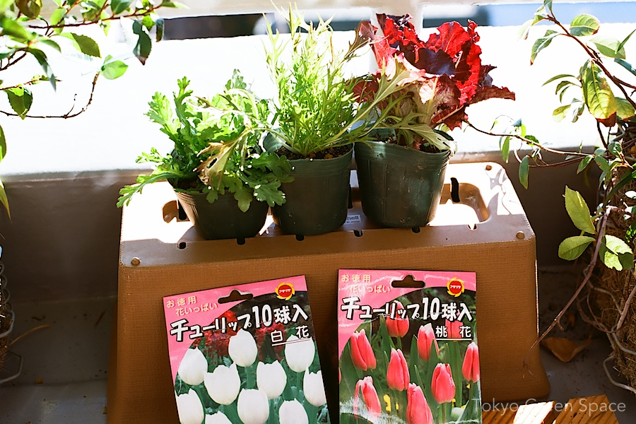 winter_greens_tulips_nakano_balcony