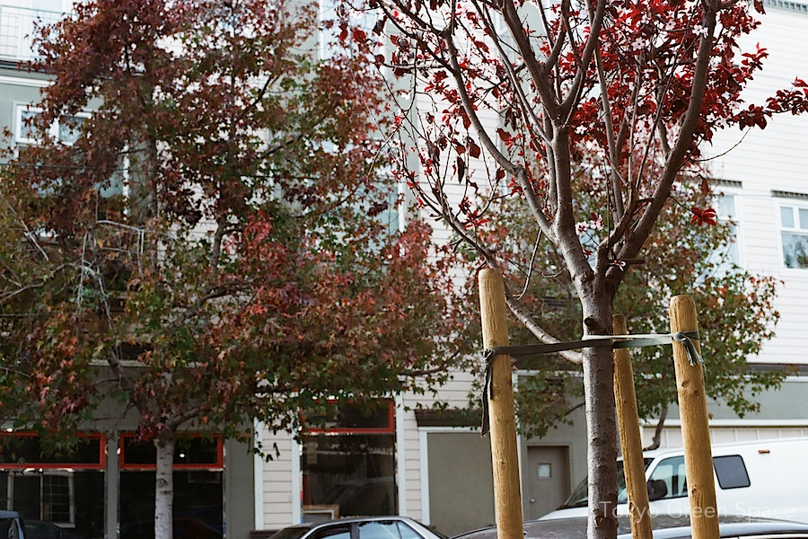 fall_spring_trees_sanfrancisco