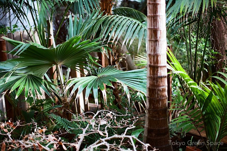 jungle_clintonpark