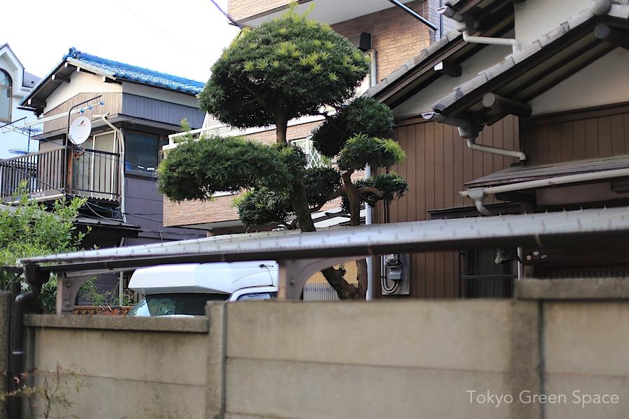 carpark_accomodates_poodle_tree_inomaki